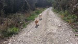Honden mee op vakantie